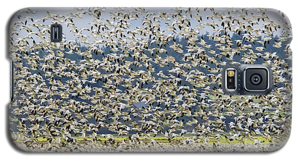 Goose Storm Galaxy S5 Case by Mike Dawson