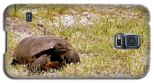 Gopher Turtle Galaxy S5 Case by Terri Mills