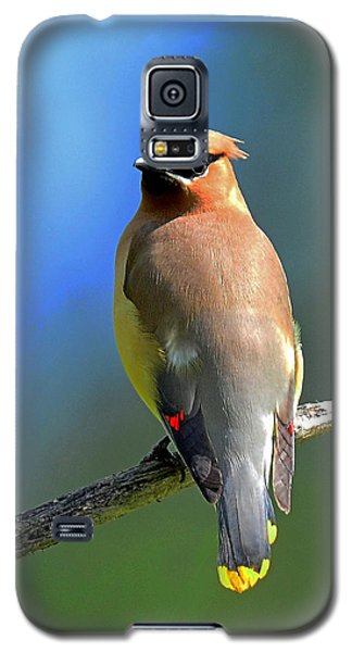 Gorgeous Cedar Waxwing Galaxy S5 Case by Rodney Campbell