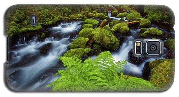 Gorton Creek Fern Galaxy S5 Case by Darren White