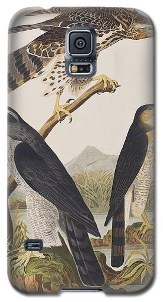 Goshawk And Stanley Hawk Galaxy S5 Case by John James Audubon