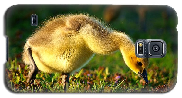 Gosling In Spring Galaxy S5 Case by Paul Ge