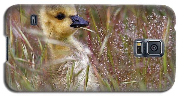 Gosling In The Meadow Galaxy S5 Case