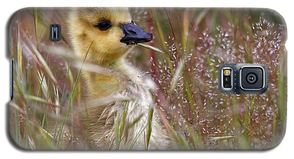 Gosling In The Meadow Galaxy S5 Case