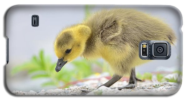 Galaxy S5 Case featuring the photograph Gosling by Kathy King