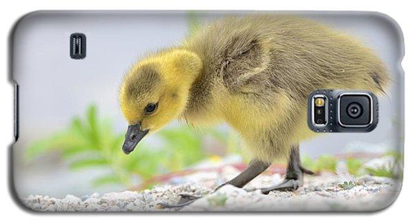 Gosling Galaxy S5 Case