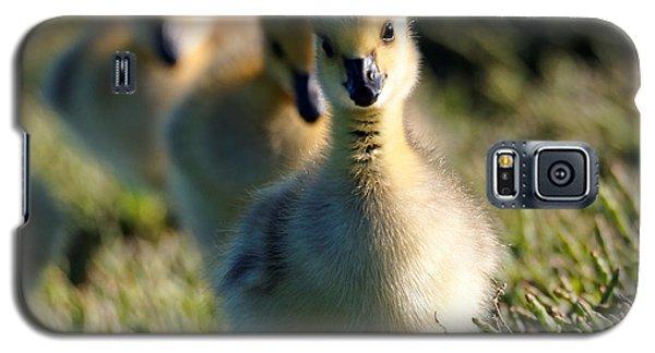 Gosling March Galaxy S5 Case