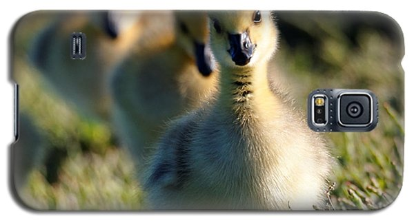 Gosling March Galaxy S5 Case