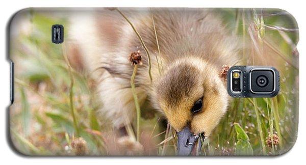 Gosling Nibble Galaxy S5 Case
