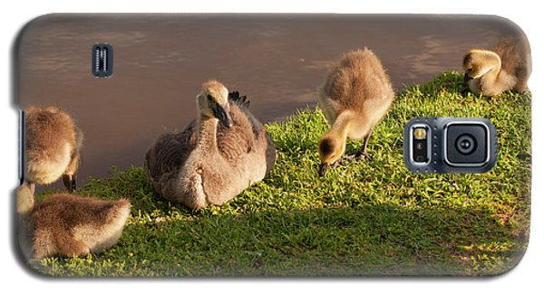 Goslings Basking In The Sunset Galaxy S5 Case by Chris Flees