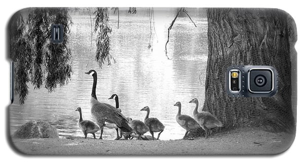Goslings Bw7 Galaxy S5 Case by Clarice Lakota