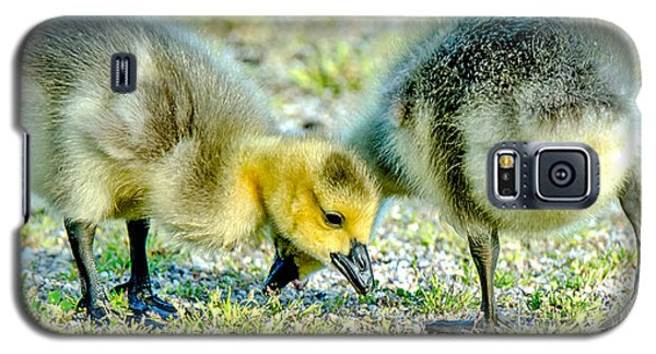 Goslings Snacking Galaxy S5 Case