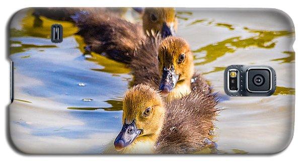 Got My Ducks In A Row Galaxy S5 Case
