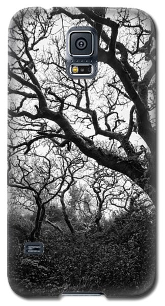 Gothic Woods II Galaxy S5 Case
