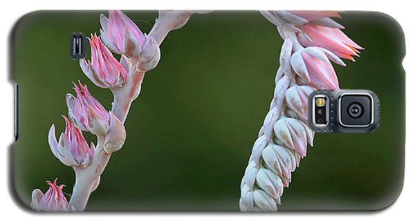 Galaxy S5 Case featuring the photograph Graceful by Elvira Butler