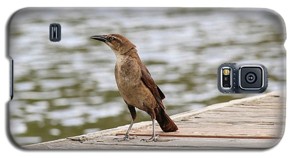 Grackle On A Dock Galaxy S5 Case