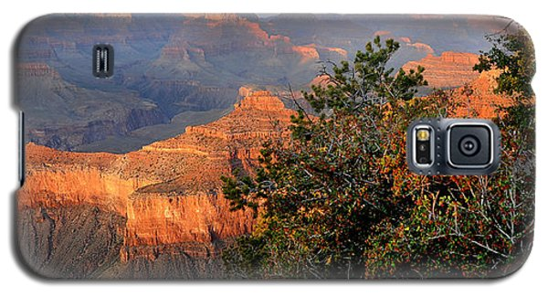 Grand Canyon South Rim - Red Berry Bush Along Path Galaxy S5 Case