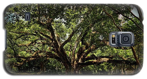 Grand Oak Tree Galaxy S5 Case