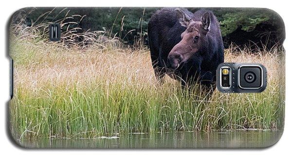 Grand Teton Moose Galaxy S5 Case