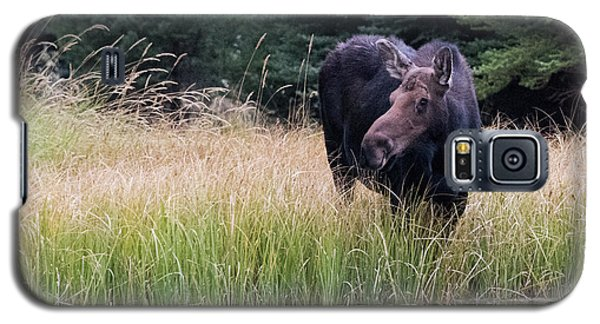 Grand Teton Moose Galaxy S5 Case