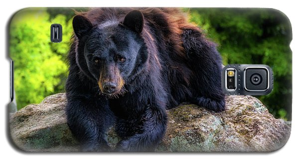 Grandfather Mountain Black Bear Galaxy S5 Case