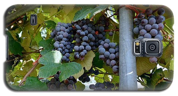 Grape Arbor 1 Galaxy S5 Case