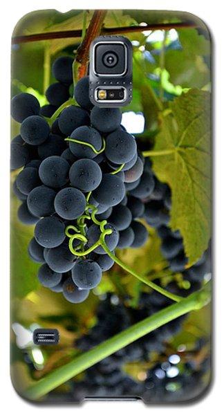 Grape Arbor 2 Galaxy S5 Case