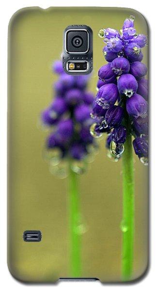 Grape Hyacinth Galaxy S5 Case by Joseph Skompski