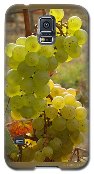 Grape Spiral Galaxy S5 Case by Patricia Overmoyer