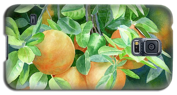 Grapefruit With Background Galaxy S5 Case by Sharon Freeman