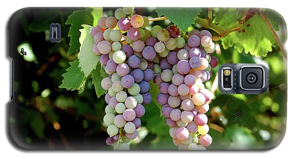 Grapes In Color  Galaxy S5 Case