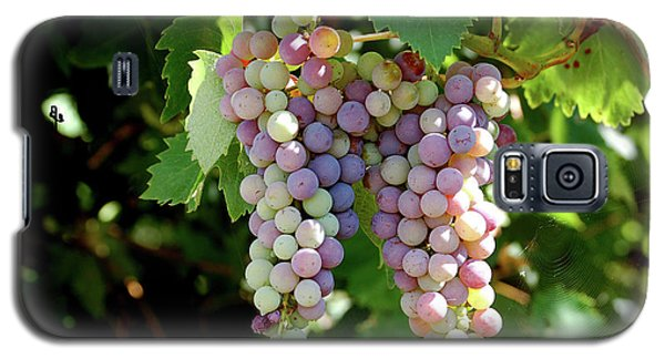 Grapes In Color  Galaxy S5 Case
