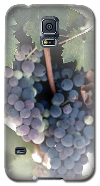 Grapes On The Vine I Galaxy S5 Case by Sherry Hallemeier