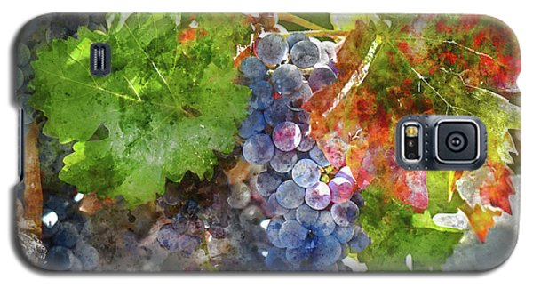 Grapes On The Vine In The Autumn Season Galaxy S5 Case