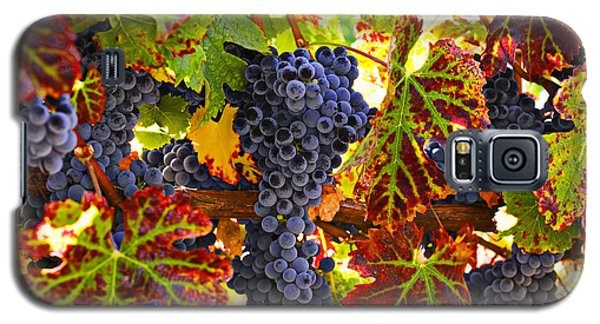 Grapes On Vine In Vineyards Galaxy S5 Case by Garry Gay