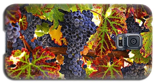 Wine Galaxy S5 Case - Grapes On Vine In Vineyards by Garry Gay