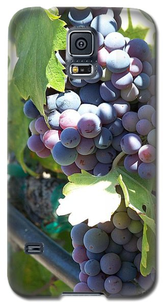 Grapevine Galaxy S5 Case