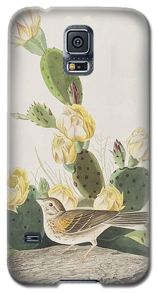 Grass Finch Or Bay Winged Bunting Galaxy S5 Case by John James Audubon