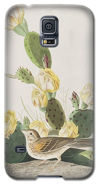 Grass Finch Or Bay Winged Bunting Galaxy S5 Case