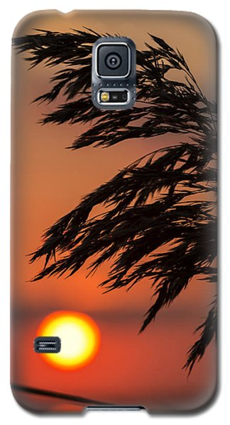 Grass Silhouette Galaxy S5 Case
