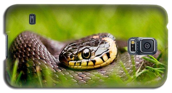 Brown Snake Galaxy S5 Case - Grass Snake - Natrix Natrix by Roeselien Raimond