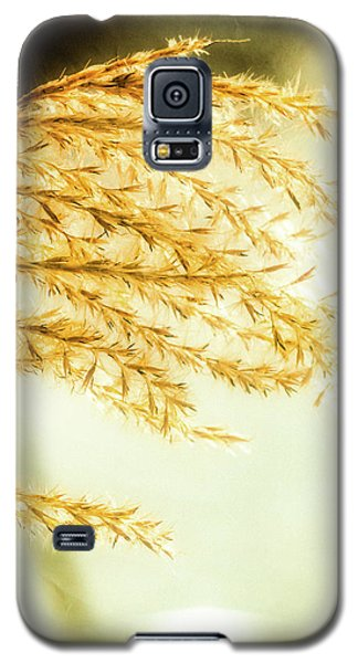 Grasses Of Gold Galaxy S5 Case