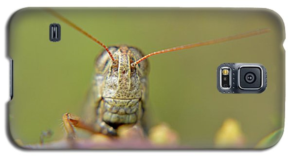 Galaxy S5 Case featuring the photograph Grasshopper by Janice Spivey
