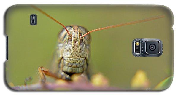 Grasshopper Galaxy S5 Case by Janice Spivey