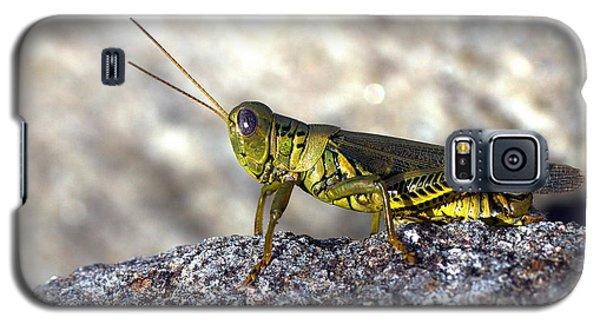 Grasshopper Galaxy S5 Case by Joseph Skompski