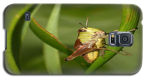Galaxy S5 Case featuring the photograph Grasshopper by Jouko Lehto