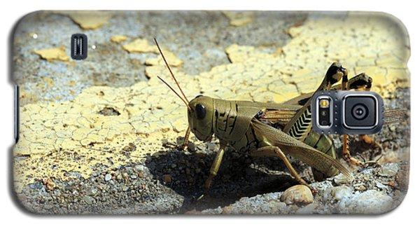 Grasshopper Laying Eggs Galaxy S5 Case