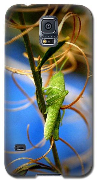 Grassy Hopper Galaxy S5 Case by Chris Brannen