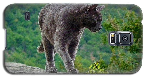 Gray Cat Stalking Galaxy S5 Case