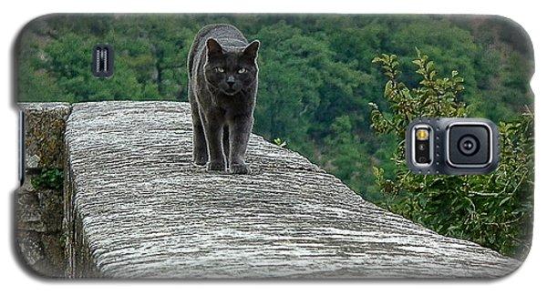 Gray Cat Prowling Galaxy S5 Case